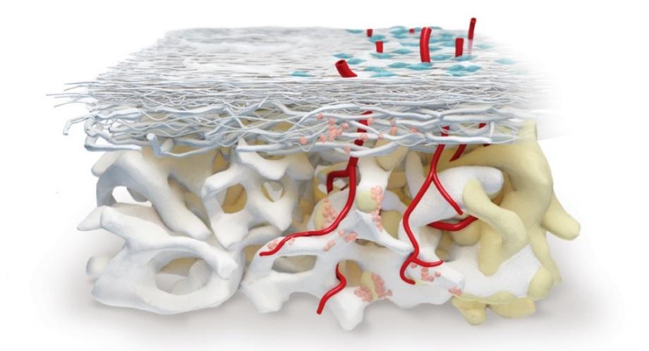 Umjetna kost kod cijeljenja i koštane regeneracije